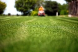 residential lawn maintenance in Chesapeake VA