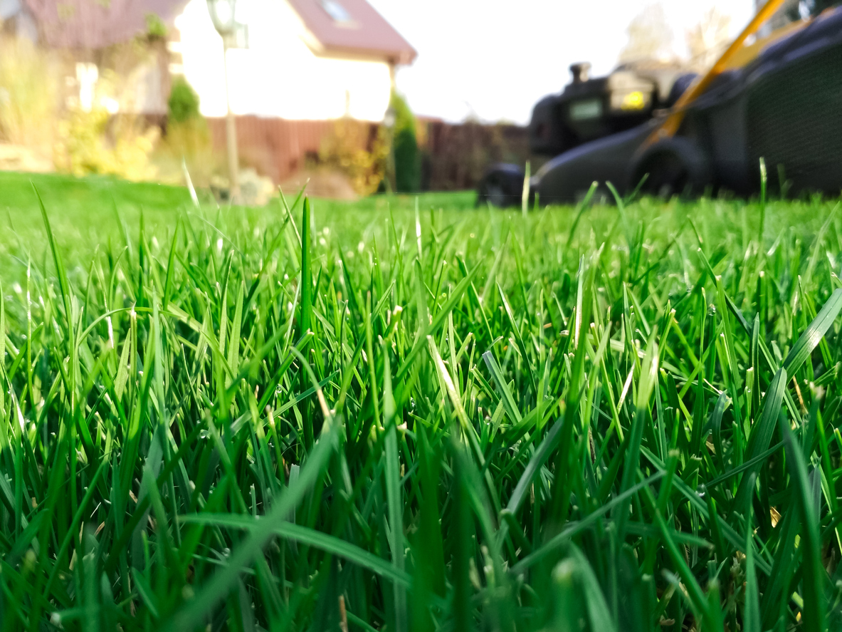 Lawn Care Services In Chesapeake